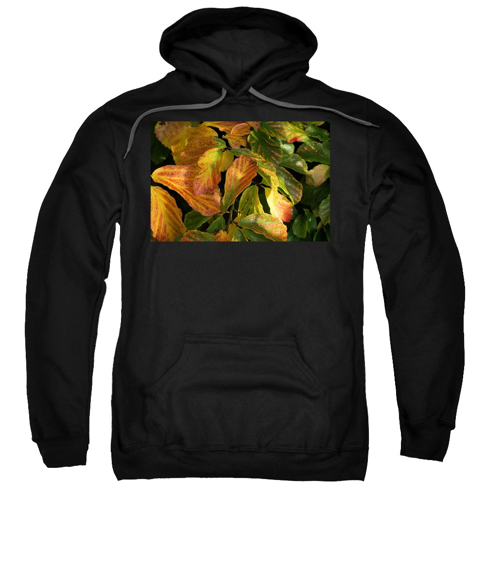 Autumn Sweatshirt featuring the photograph Autumn Leaves 91 by Ron Harpham