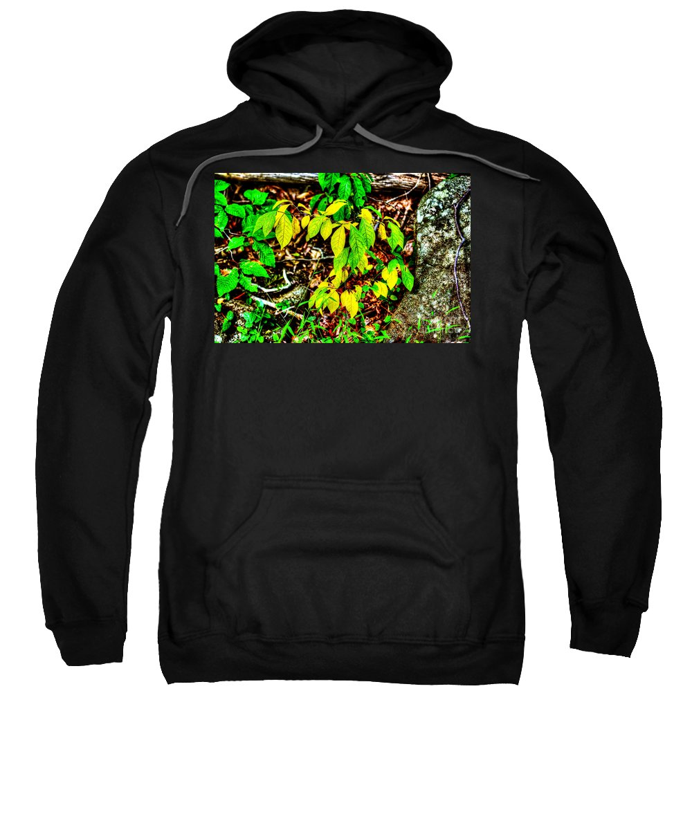 Leaves Sweatshirt featuring the photograph Autumn Leaves In Green And Yellow by Mother Nature