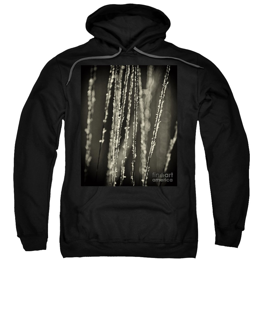 North America Sweatshirt featuring the photograph Backlit Sepia Toned Wild Grasses In Black And White by Dave Welling
