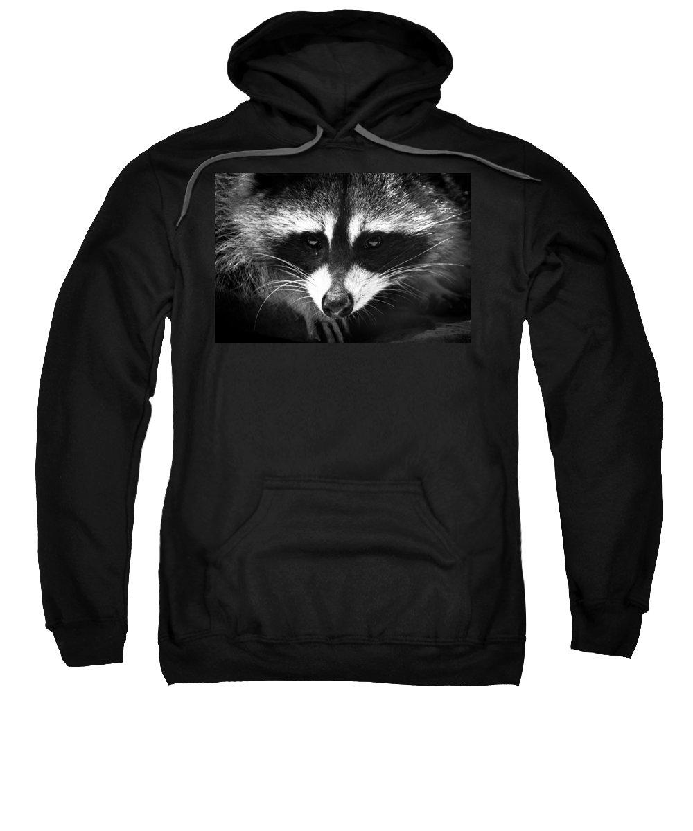 Raccoon Sweatshirt featuring the photograph Bandit by Shane Holsclaw