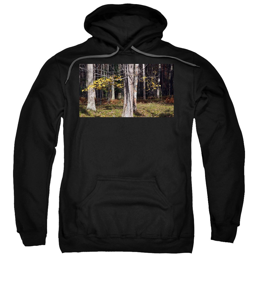 Tree Sweatshirt featuring the photograph Bare by Crystal Harman