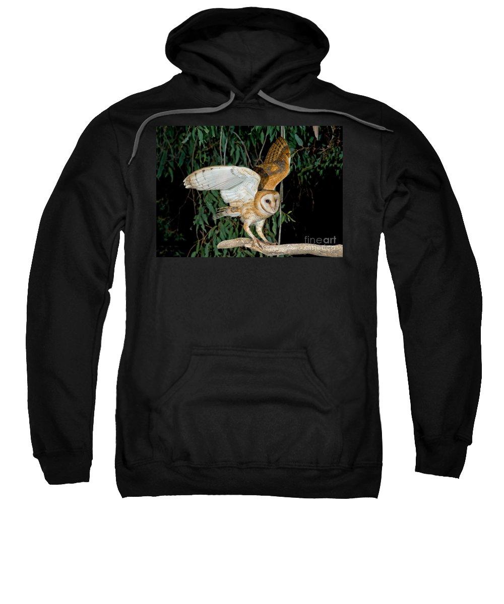 Animal Sweatshirt featuring the photograph Barn Owl Alights by Anthony Mercieca