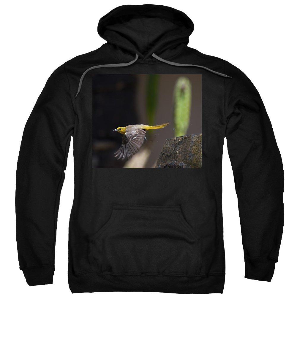 Birds Sweatshirt featuring the photograph Bathed by Joe Schofield