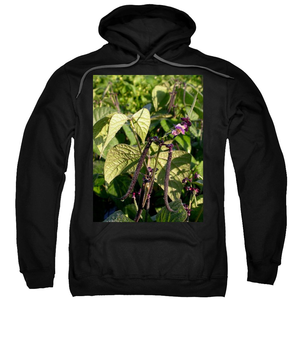 Purple Beans Sweatshirt featuring the photograph Bean And Beauty by Cynthia Wallentine