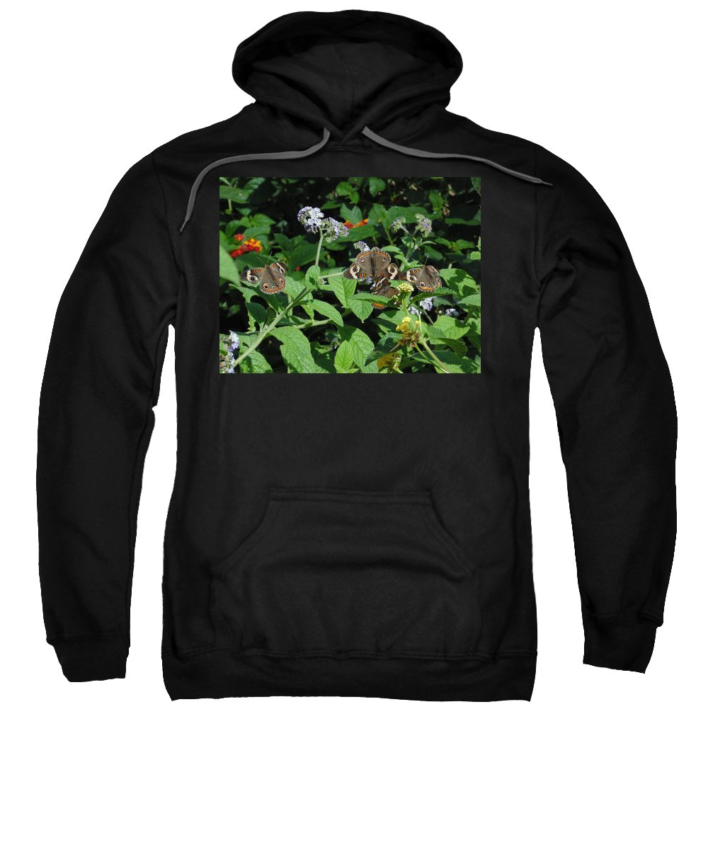 Nature Sweatshirt featuring the photograph Beautiful Buckeyes by Stephanie Grant