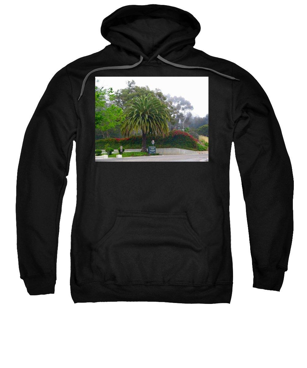 Tree Sweatshirt featuring the photograph Beautiful Ventura Palm by Denise Mazzocco