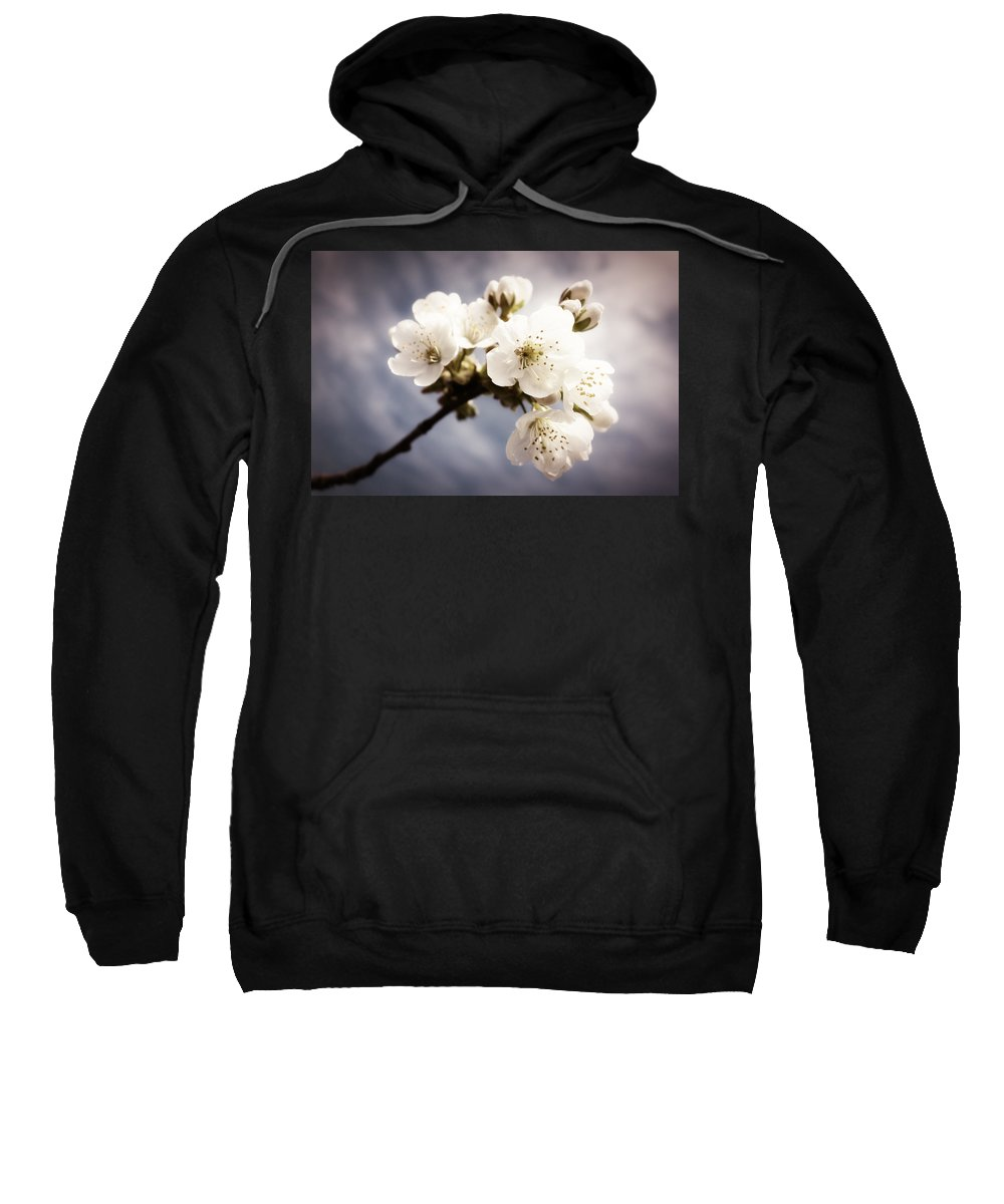 Apple Blossom Sweatshirt featuring the photograph Beautiful White Blossoms by Matthias Hauser
