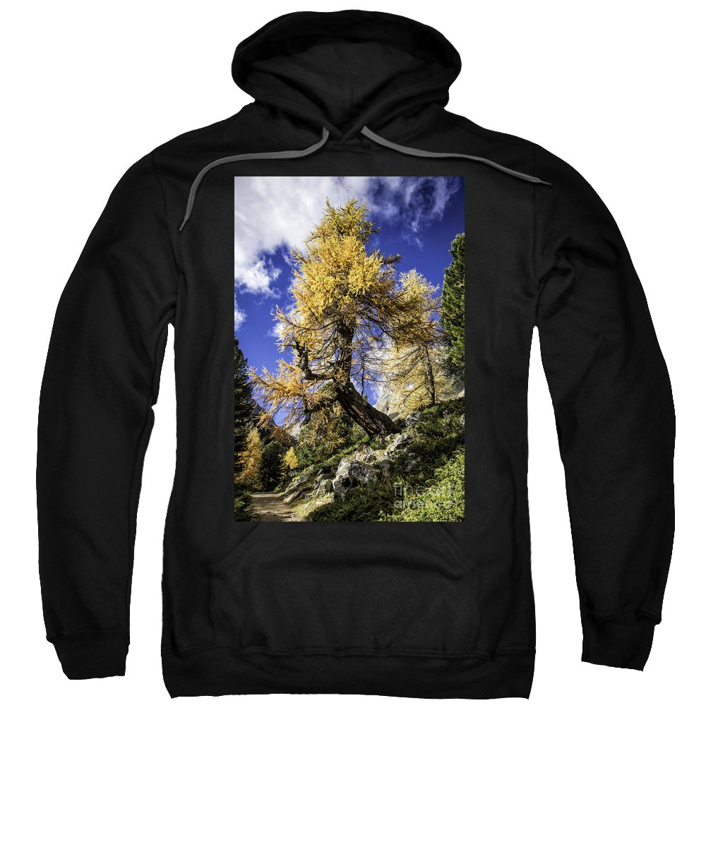 Pontresina Sweatshirt featuring the photograph Bent Tree by Timothy Hacker