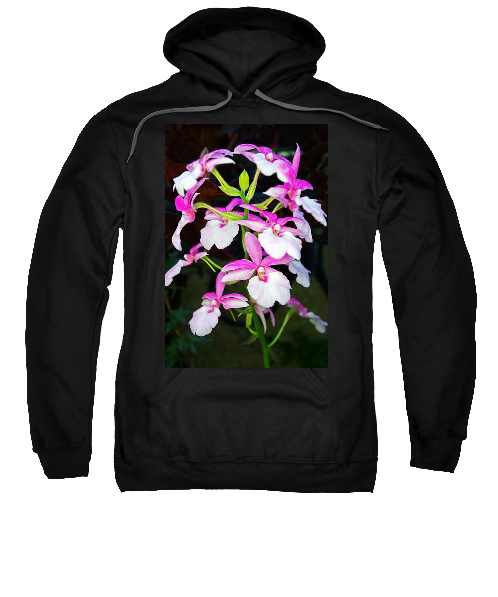 Orchids Sweatshirt featuring the photograph 'betty' Orchid by Rich Walter