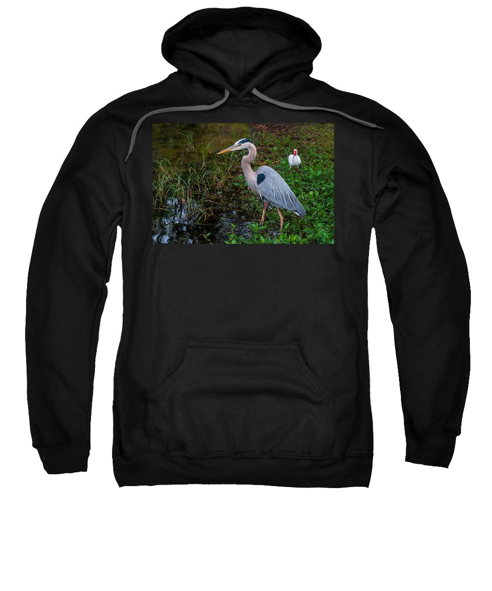 Great Sweatshirt featuring the photograph Big Blue And The Ibis by Photos By Cassandra