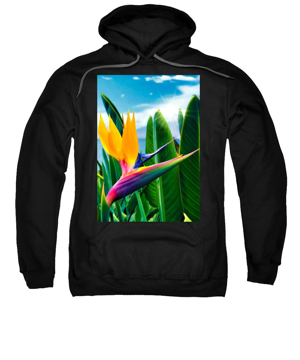 Flower Sweatshirt featuring the photograph Bird Of Paradise 5 by Dawn Eshelman