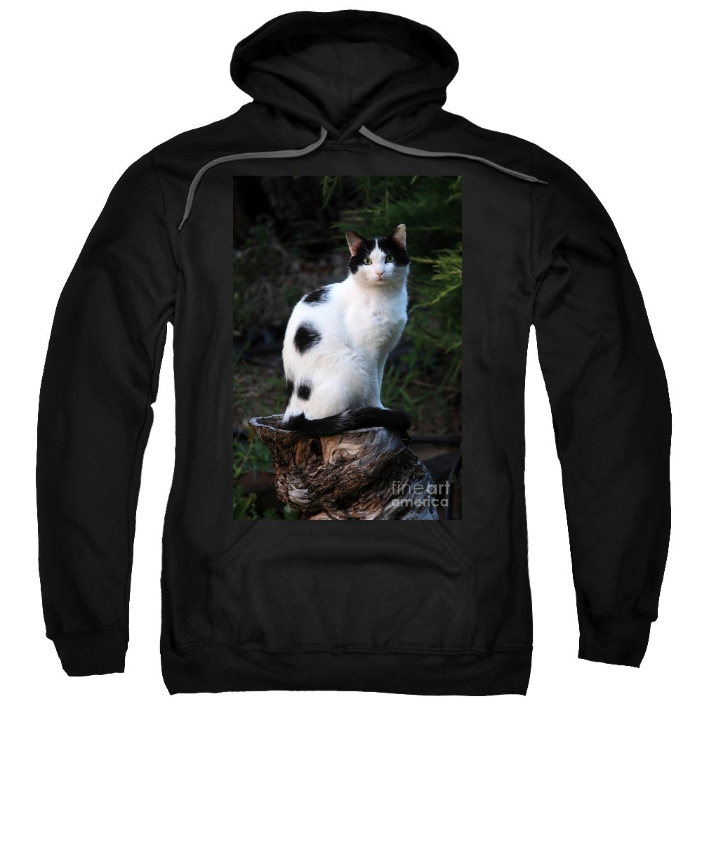Cat Sweatshirt featuring the photograph Black And White Cat On Tree Stump by Carol Groenen