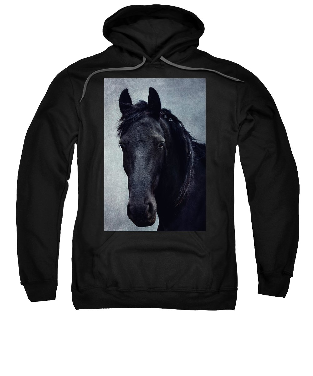 Horse Sweatshirt featuring the photograph black Beauty by Claudia Moeckel