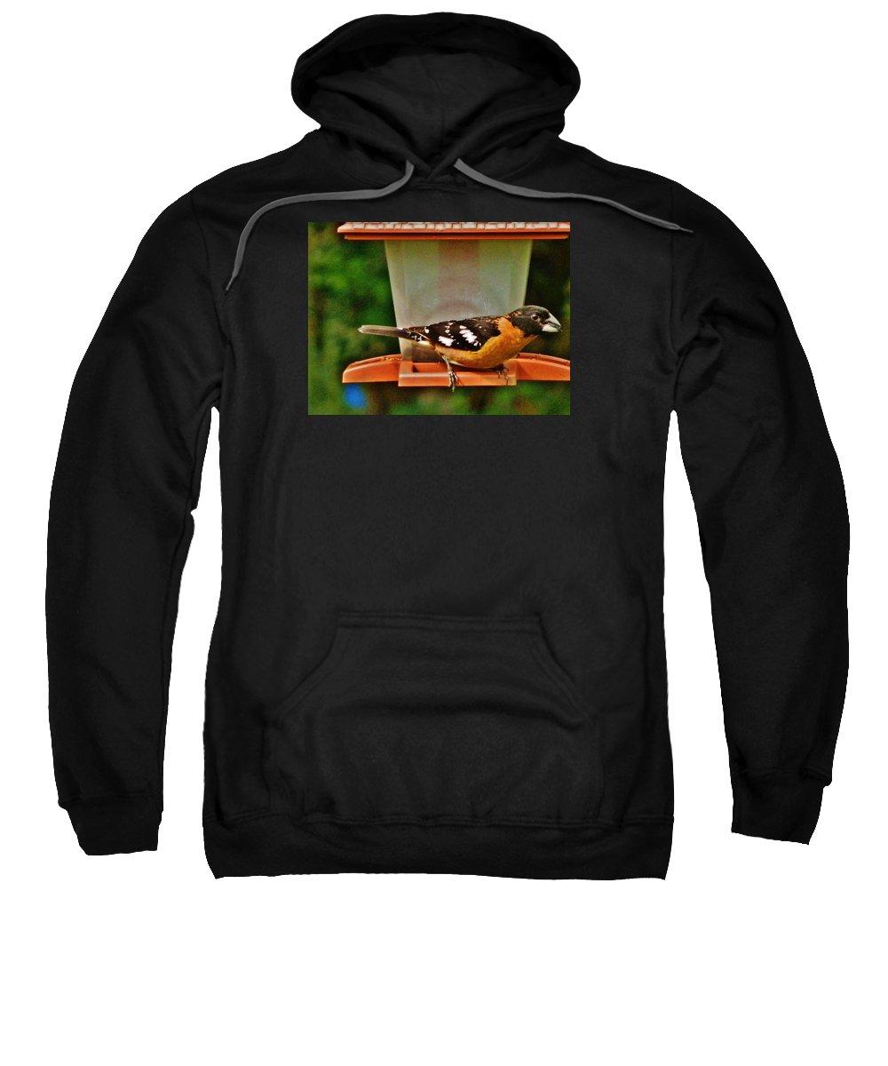 Grosbeak Sweatshirt featuring the photograph Black-headed Grosbeak by VLee Watson