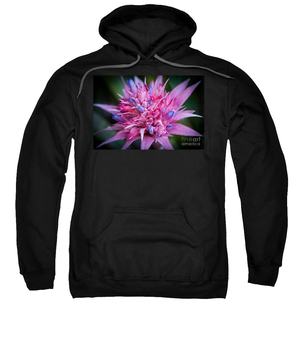 America Sweatshirt featuring the photograph Blooming Bromeliad by John Wadleigh