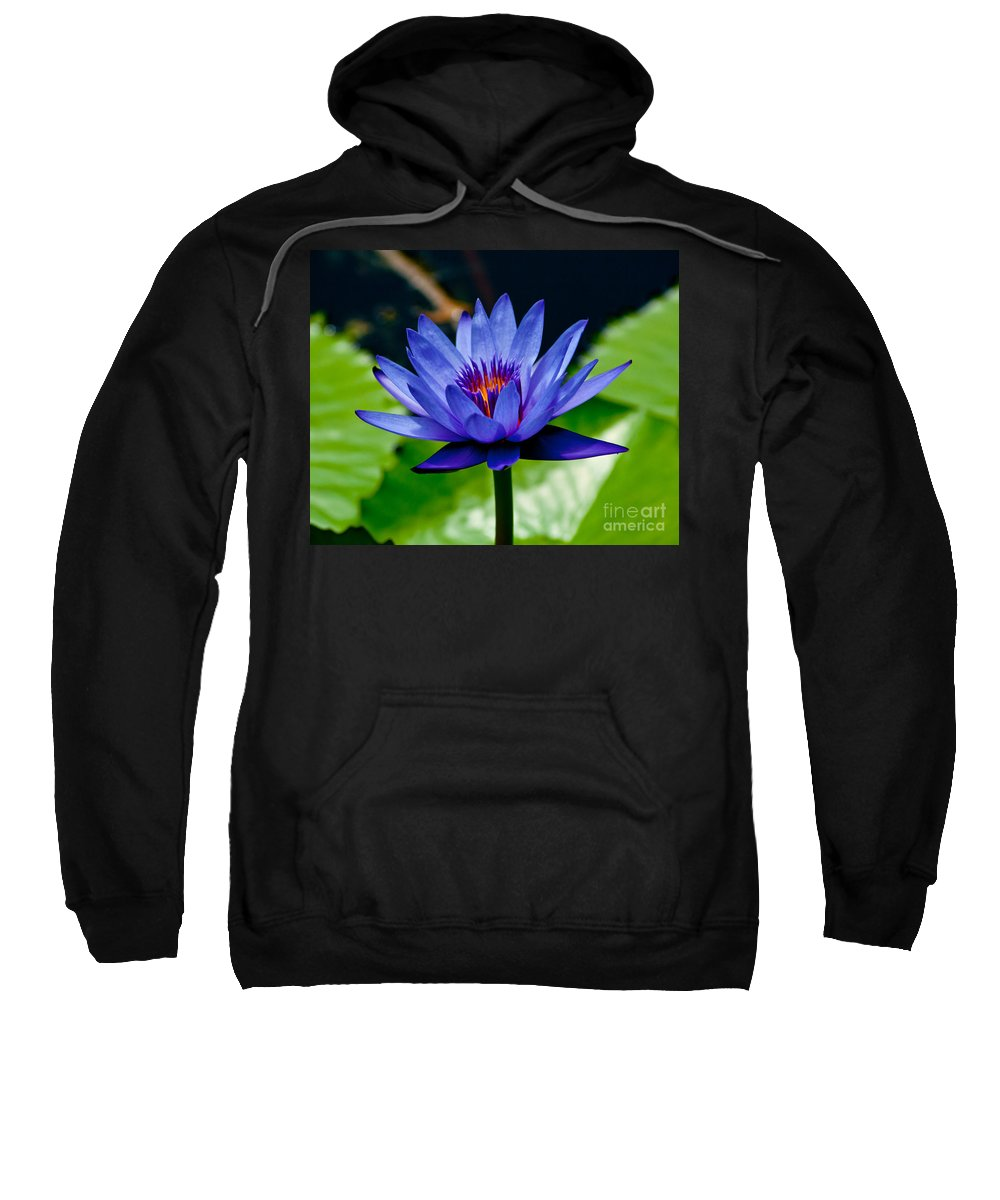 Water Lily Sweatshirt featuring the photograph Blooming Water Lily by Stephen Whalen