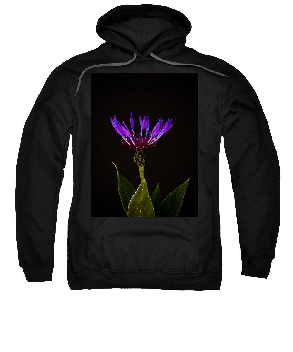 Asteraceae Sweatshirt featuring the photograph Blue Cornflower by Mark Llewellyn