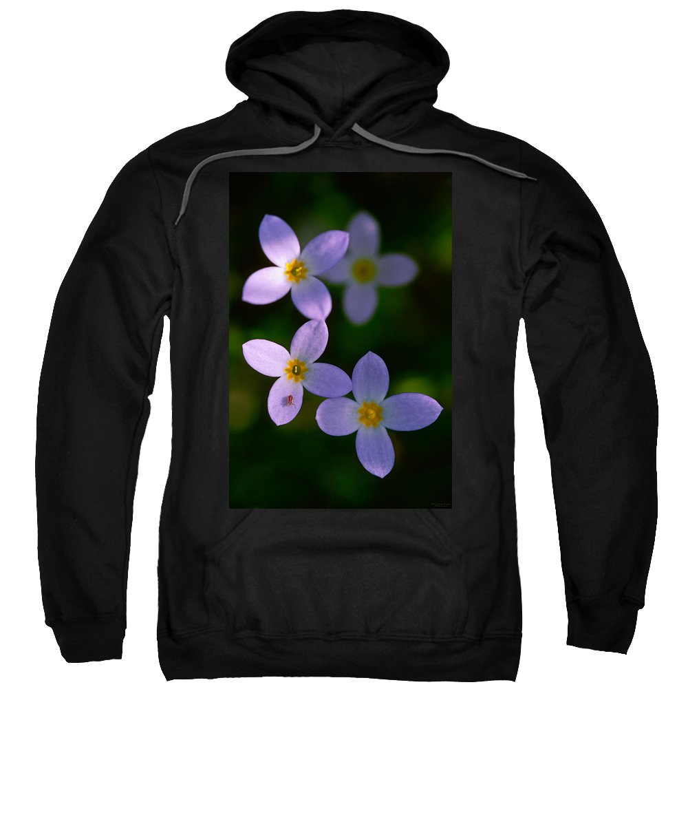 Bluet Sweatshirt featuring the photograph Bluets With Aphid by Marty Saccone