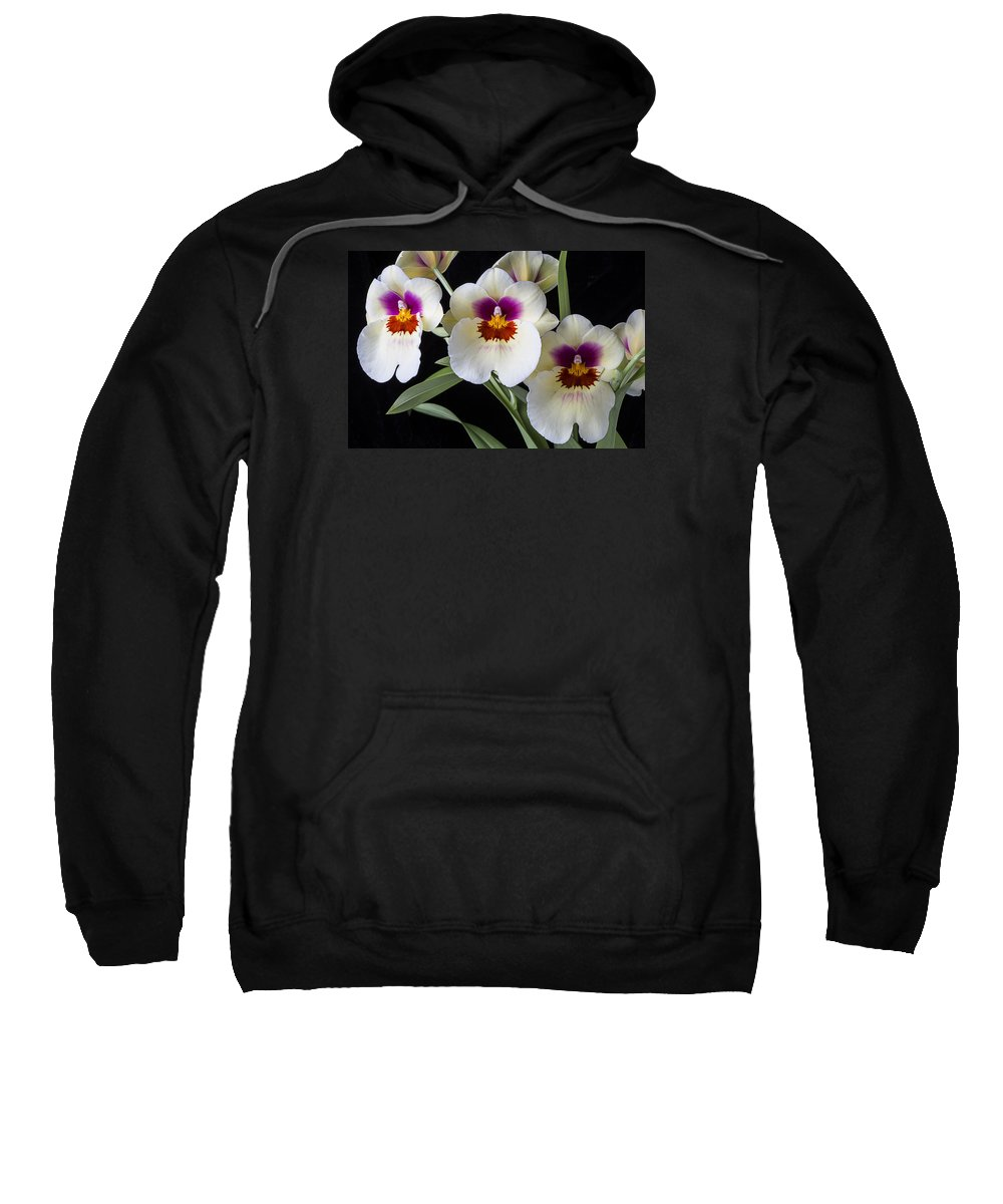 Row Sweatshirt featuring the photograph Bright Miltonia Orchids by Garry Gay