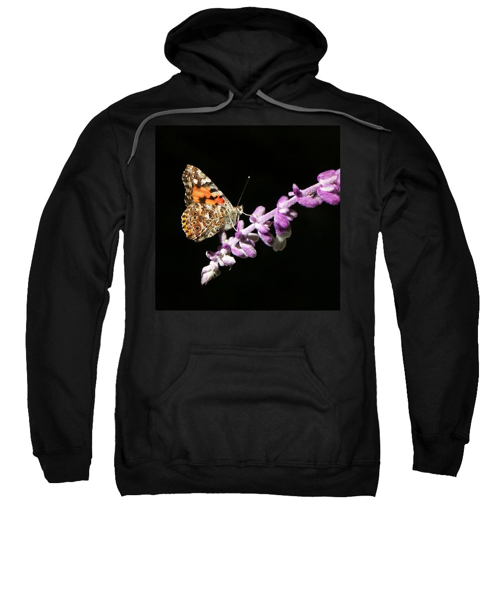 Painted Lady Sweatshirt featuring the photograph Painted Lady Butterfly On Purple Flower by Marilyn Hunt