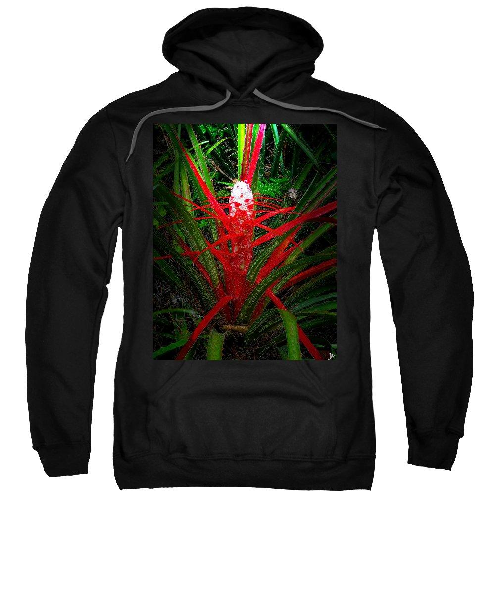 Bromelia Balansae Sweatshirt featuring the painting Bromelia Balansae by David Lee Thompson