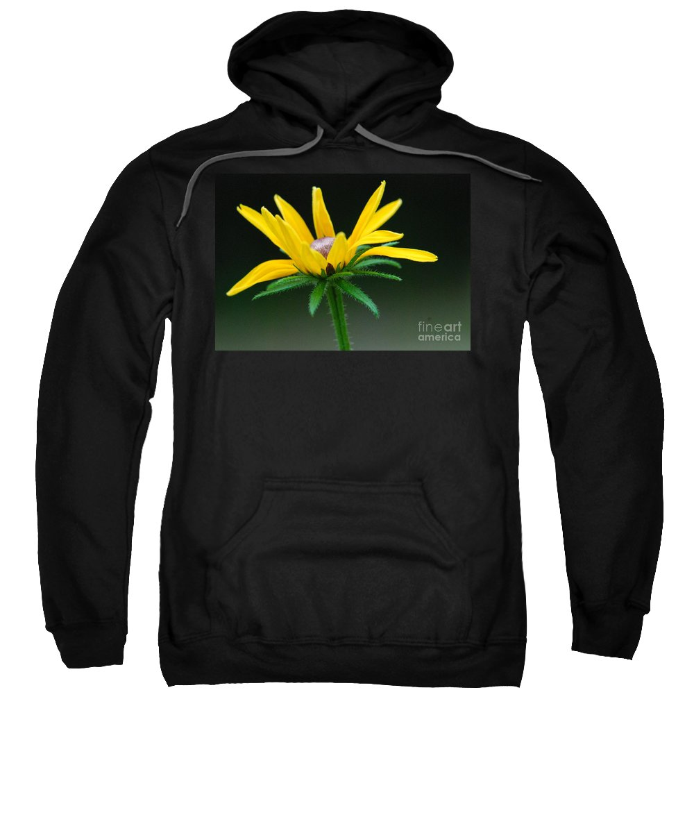Yellow Flower Sweatshirt featuring the photograph Brown-eyed Susan by Amy Porter