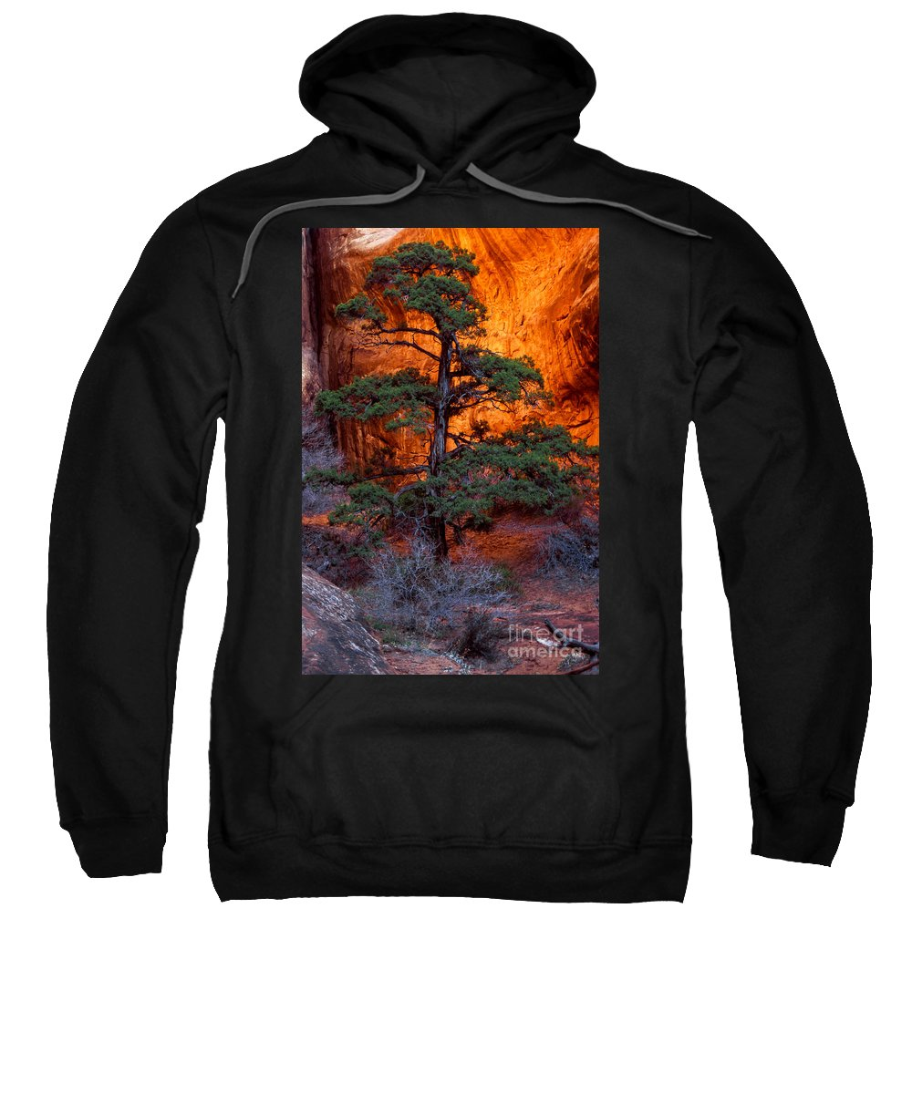 Landscape Arch Trail Sweatshirt featuring the photograph Burning Bush by Bob Phillips