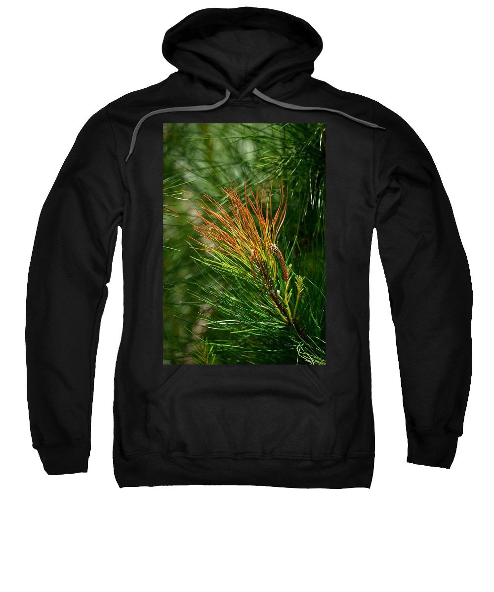 Burnished Pine Sweatshirt featuring the photograph Burnished Pine by Maria Urso