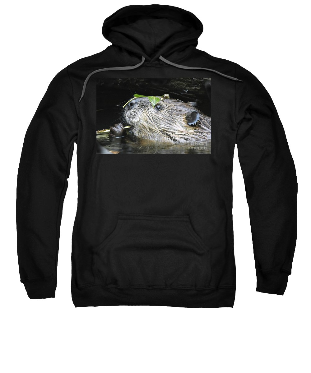 Beaver Sweatshirt featuring the photograph Busy Beaver by Gary Beeler