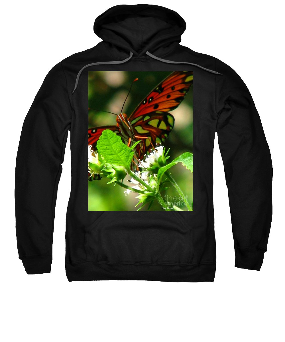 Patzer Sweatshirt featuring the photograph Butterfly Art by Greg Patzer