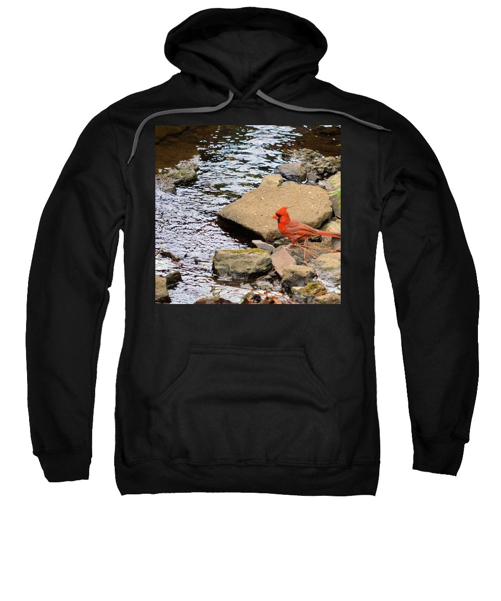 Cardinal By The Creek Sweatshirt featuring the photograph Cardinal By The Creek by Maria Urso