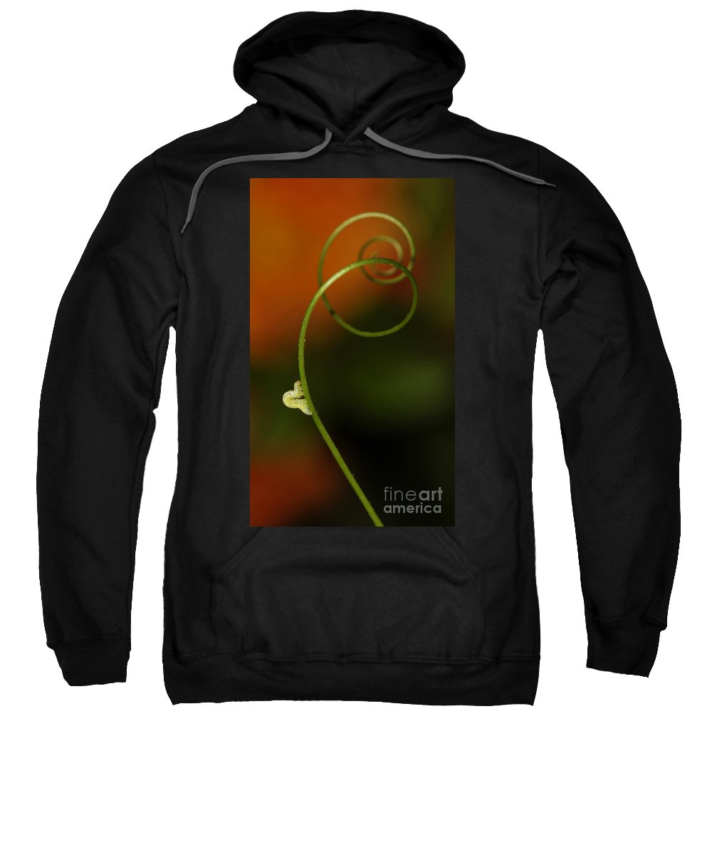 Macrophotography Sweatshirt featuring the photograph Caterpillar And Curly Branch by Jaroslaw Blaminsky