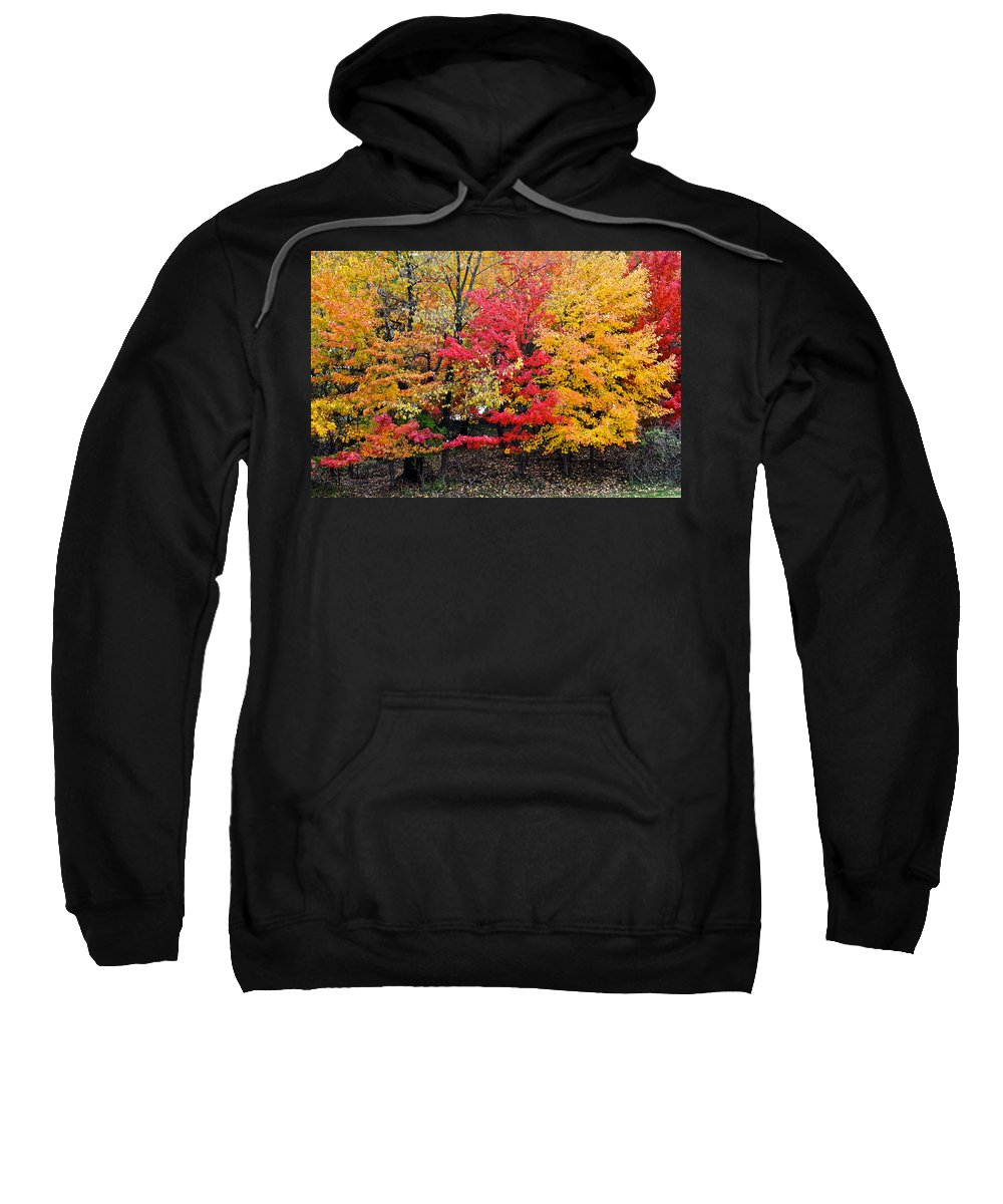 Landscape Sweatshirt featuring the photograph Center Of Attention by Frozen in Time Fine Art Photography