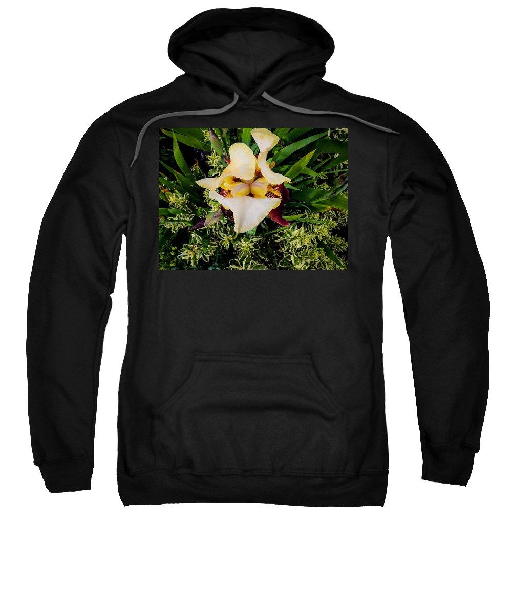 Irresistible Iris Sweatshirt featuring the photograph Centrepiece by Roxy Hurtubise