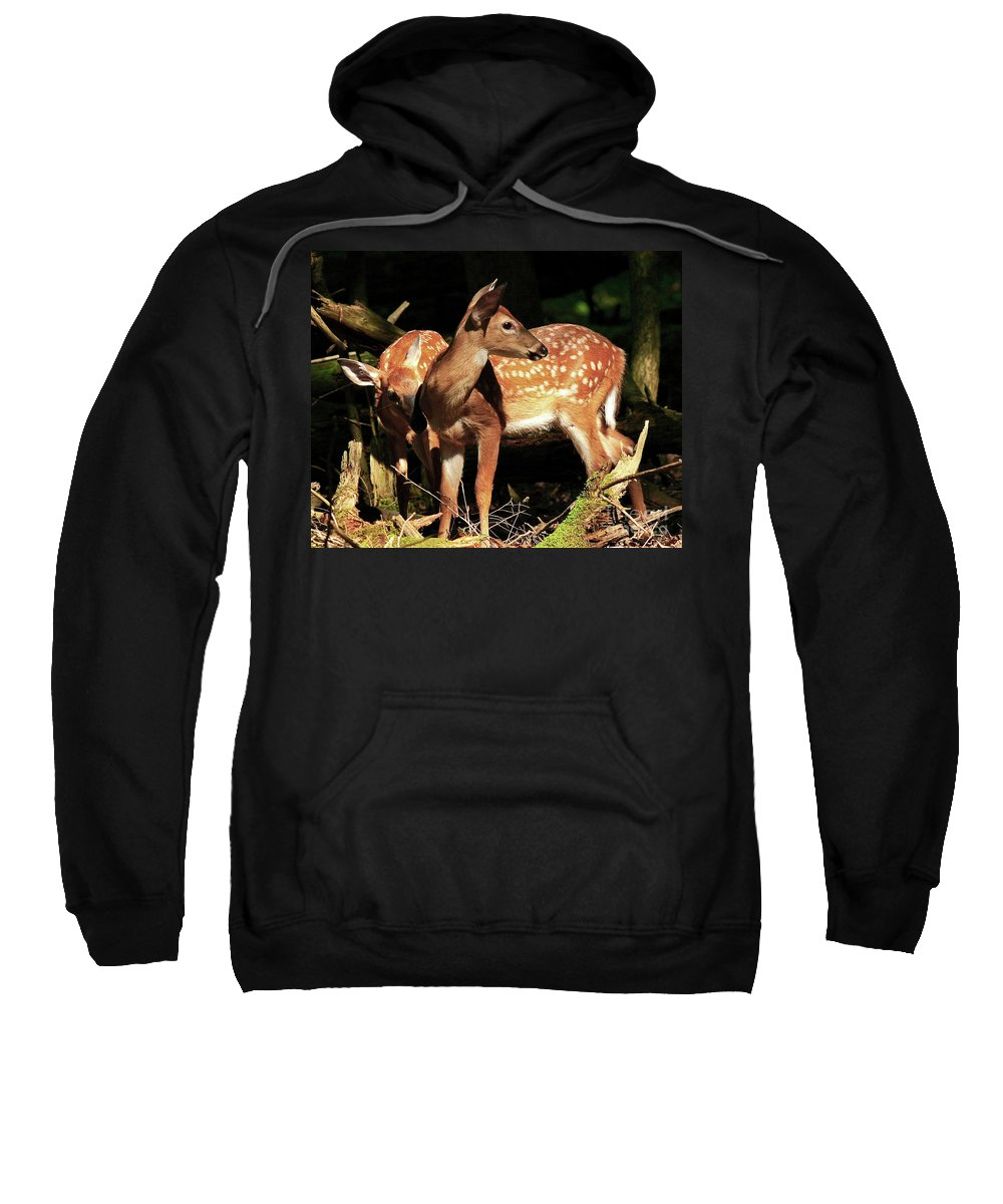 Fawn Sweatshirt featuring the photograph Checking The Back Trail by Douglas Stucky