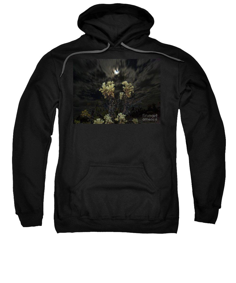 Cholla Cactus Sweatshirt featuring the photograph Cholla Light - Joshua Tree National Park by Jamie Pham