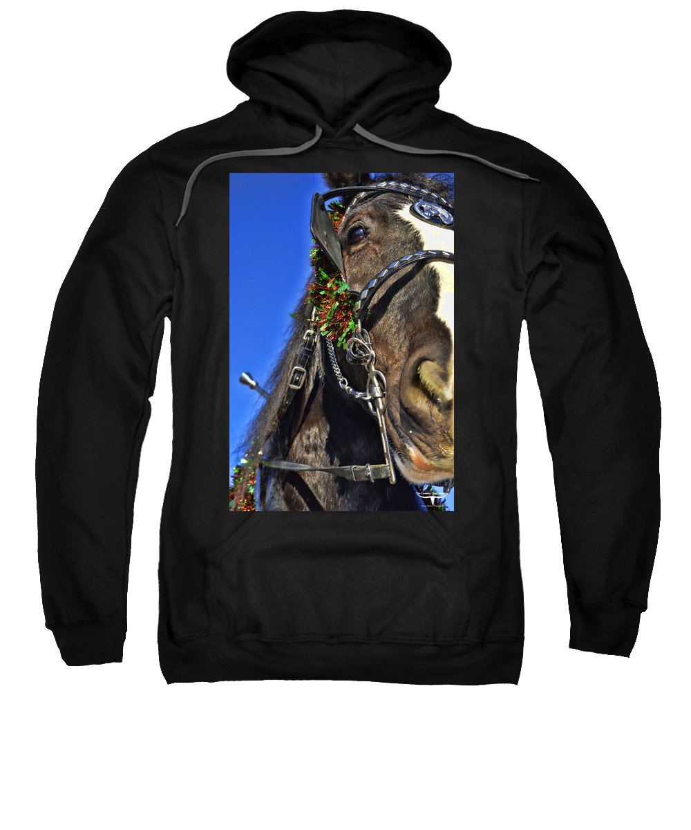 Draft Horse Sweatshirt featuring the photograph Christmas Shire by Tommy Anderson