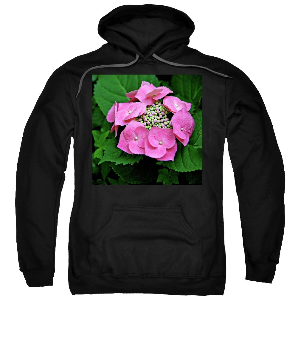Hydrangea Sweatshirt featuring the photograph Circle Of Friends by Art Block Collections