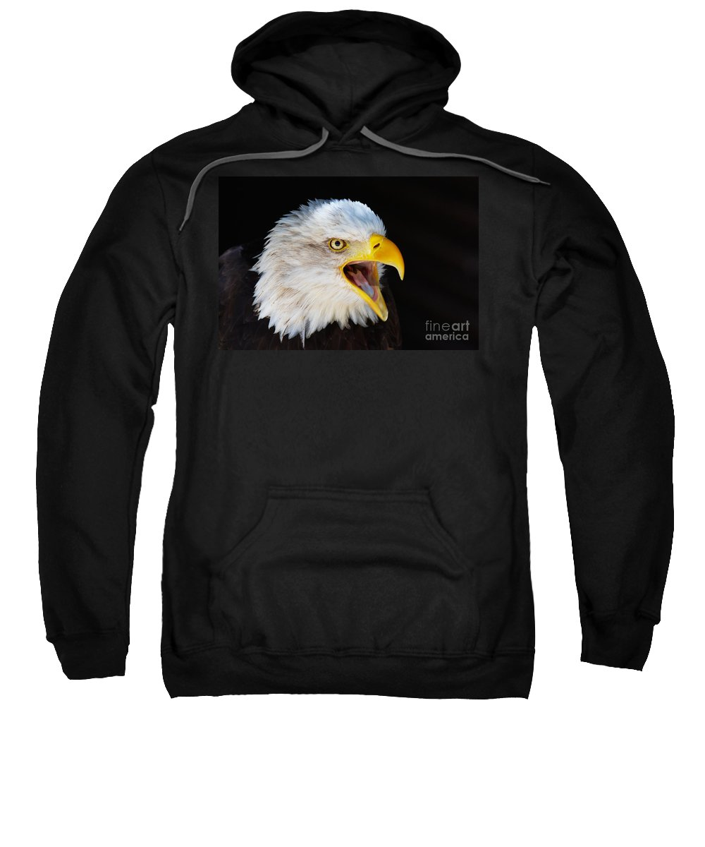 Alaska Sweatshirt featuring the photograph Closeup Portrait Of A Screaming American Bald Eagle by Nick Biemans