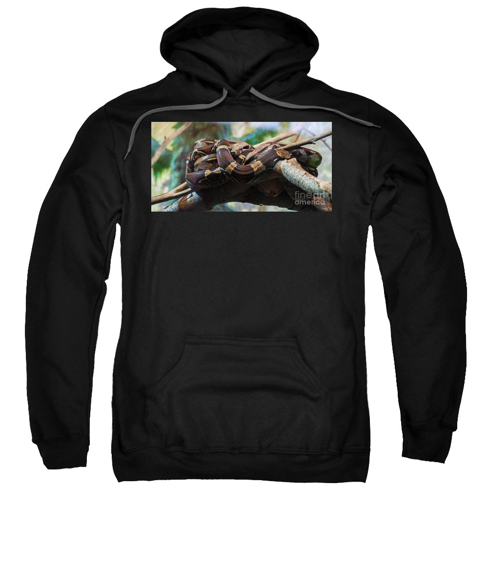 Snake Sweatshirt featuring the photograph Coiled by Bianca Nadeau