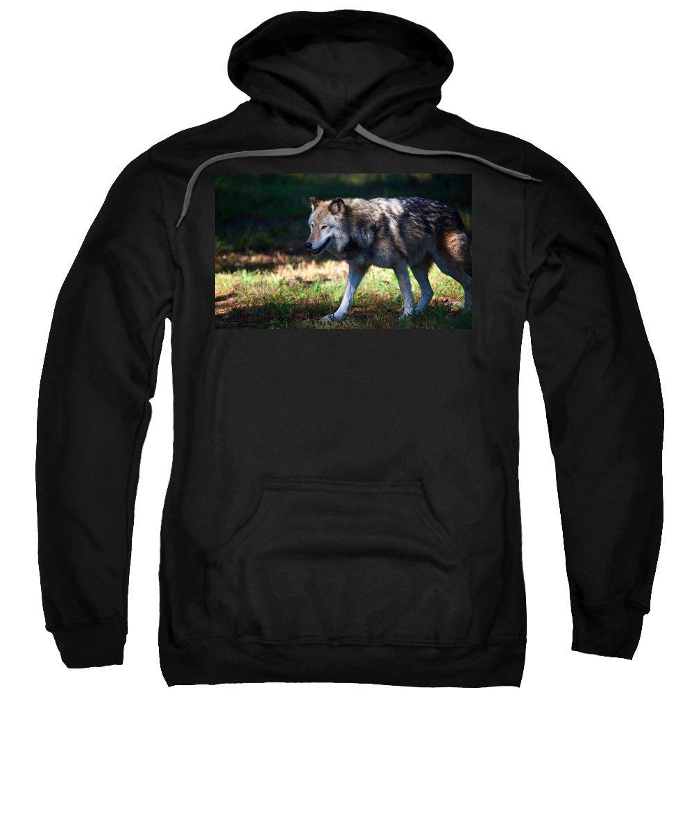 Wolf Sweatshirt featuring the photograph Colorful Wolf by Karol Livote