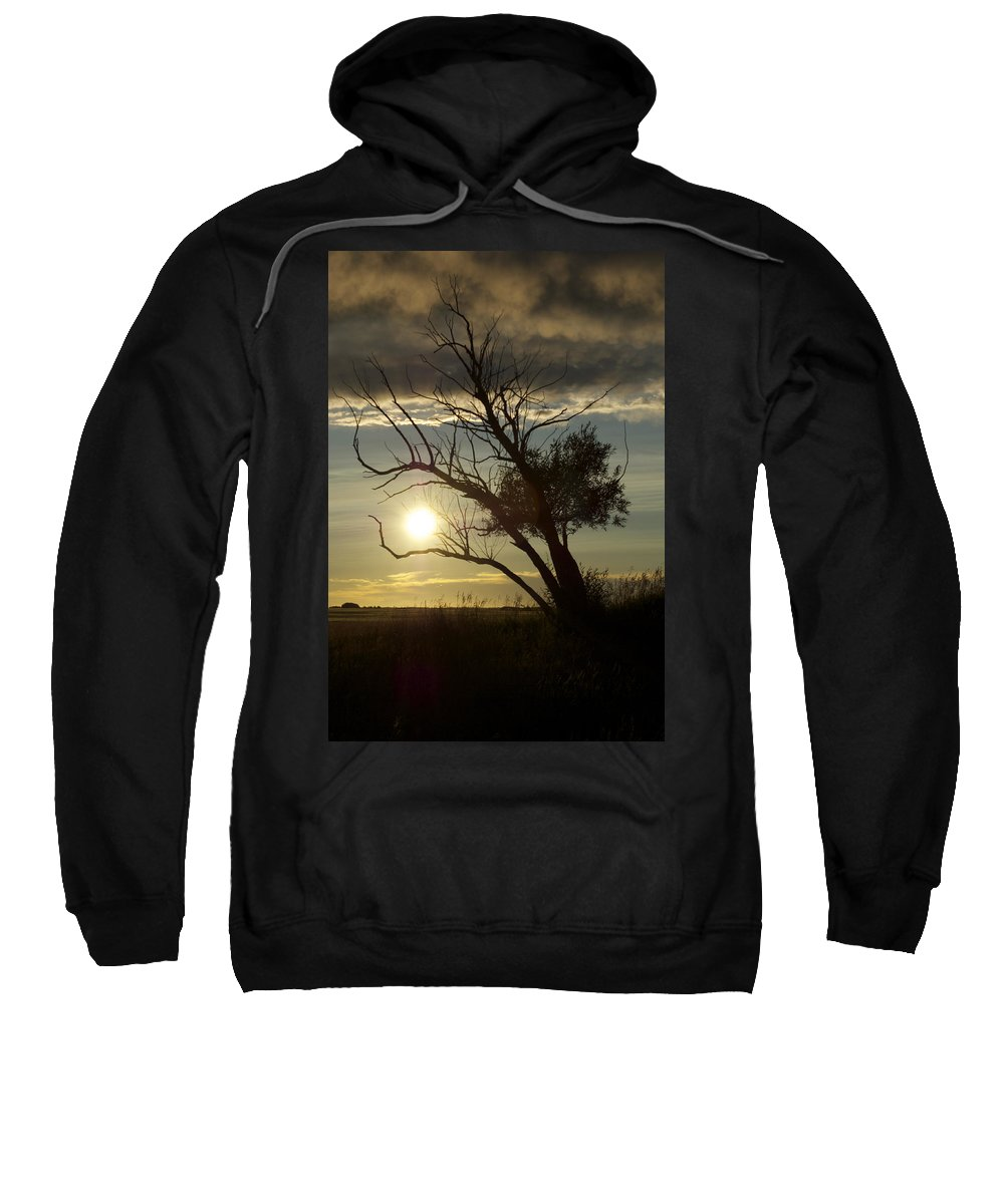 Trees Sweatshirt featuring the photograph Coming Home B by The Artist Project