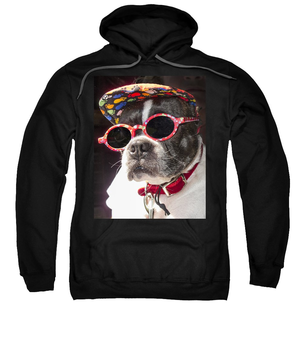 Animal Sweatshirt featuring the photograph Cool Daddy Pooch by Ray Summers Photography