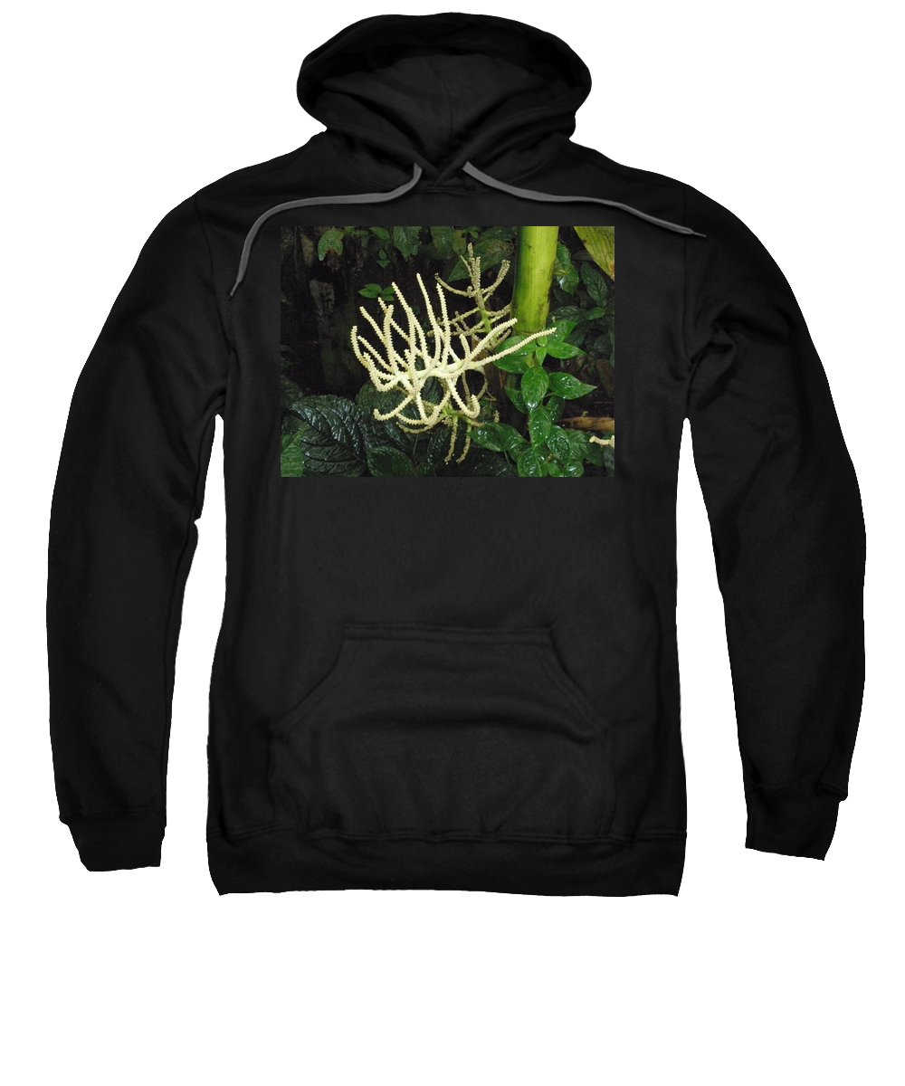 Flower Sweatshirt featuring the photograph White Palm Flower In Costa Rica by Glenn Aker