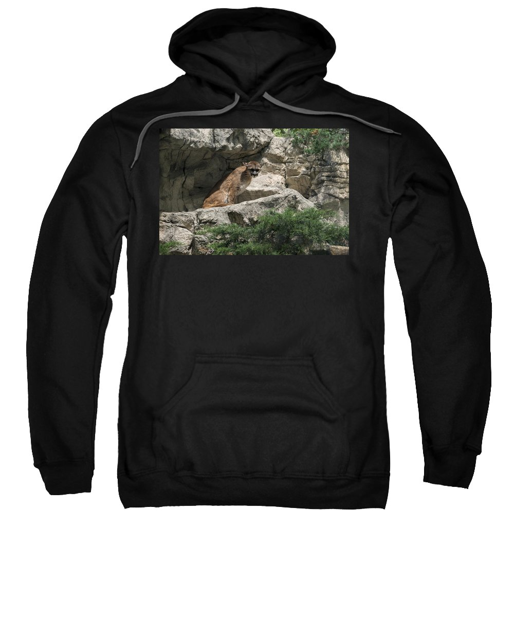 Cougar Sweatshirt featuring the photograph Cougar by Jayne Gohr