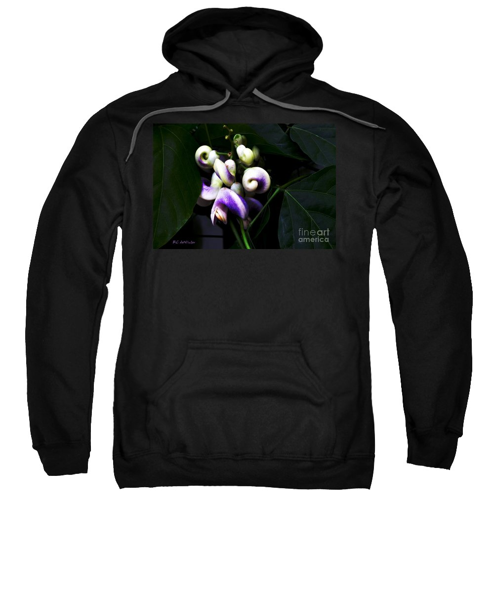 Snail Vine Sweatshirt featuring the photograph Curlicues by RC DeWinter