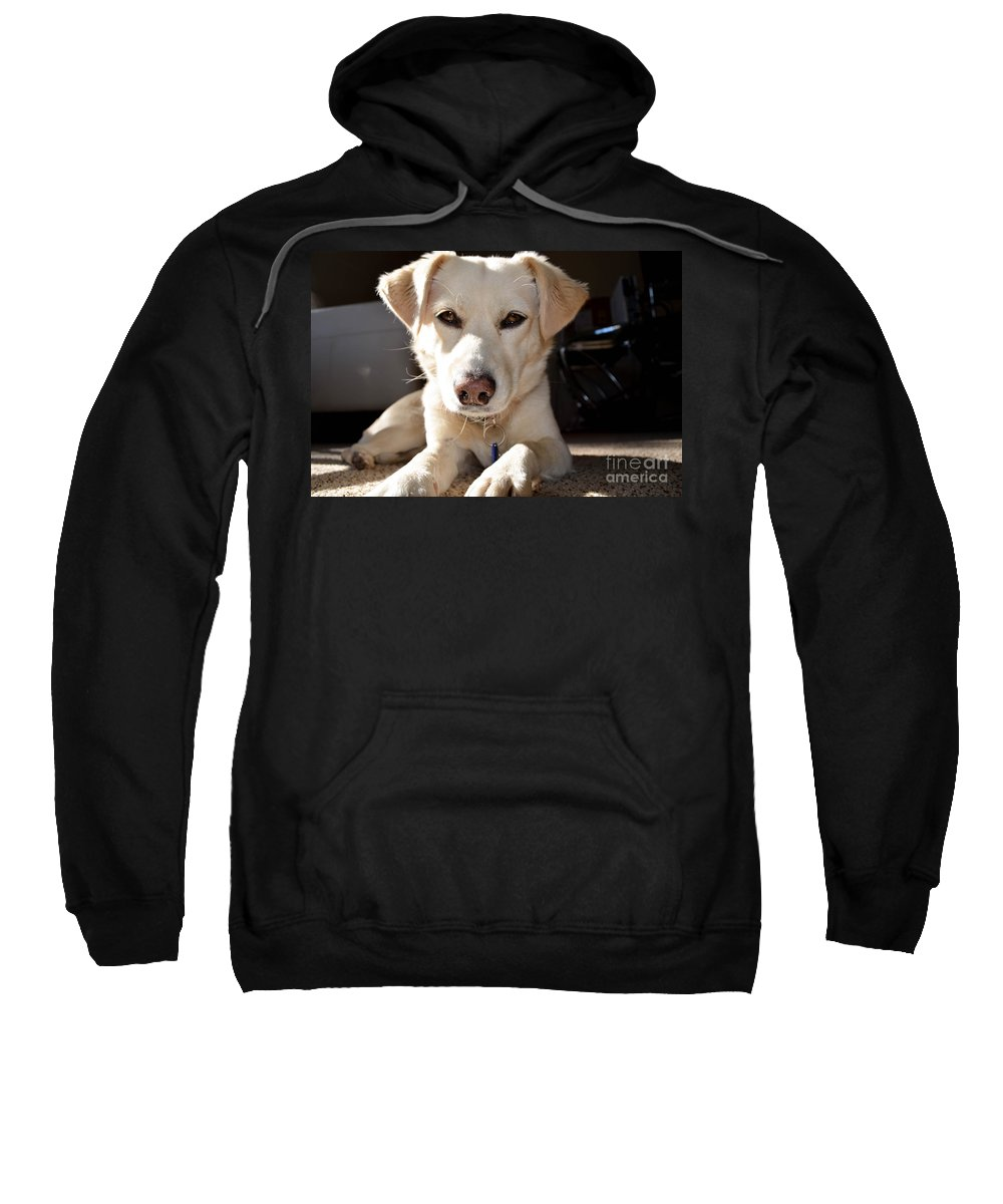 Cute Sweatshirt featuring the photograph Cute White Dog by Michael Moriarty