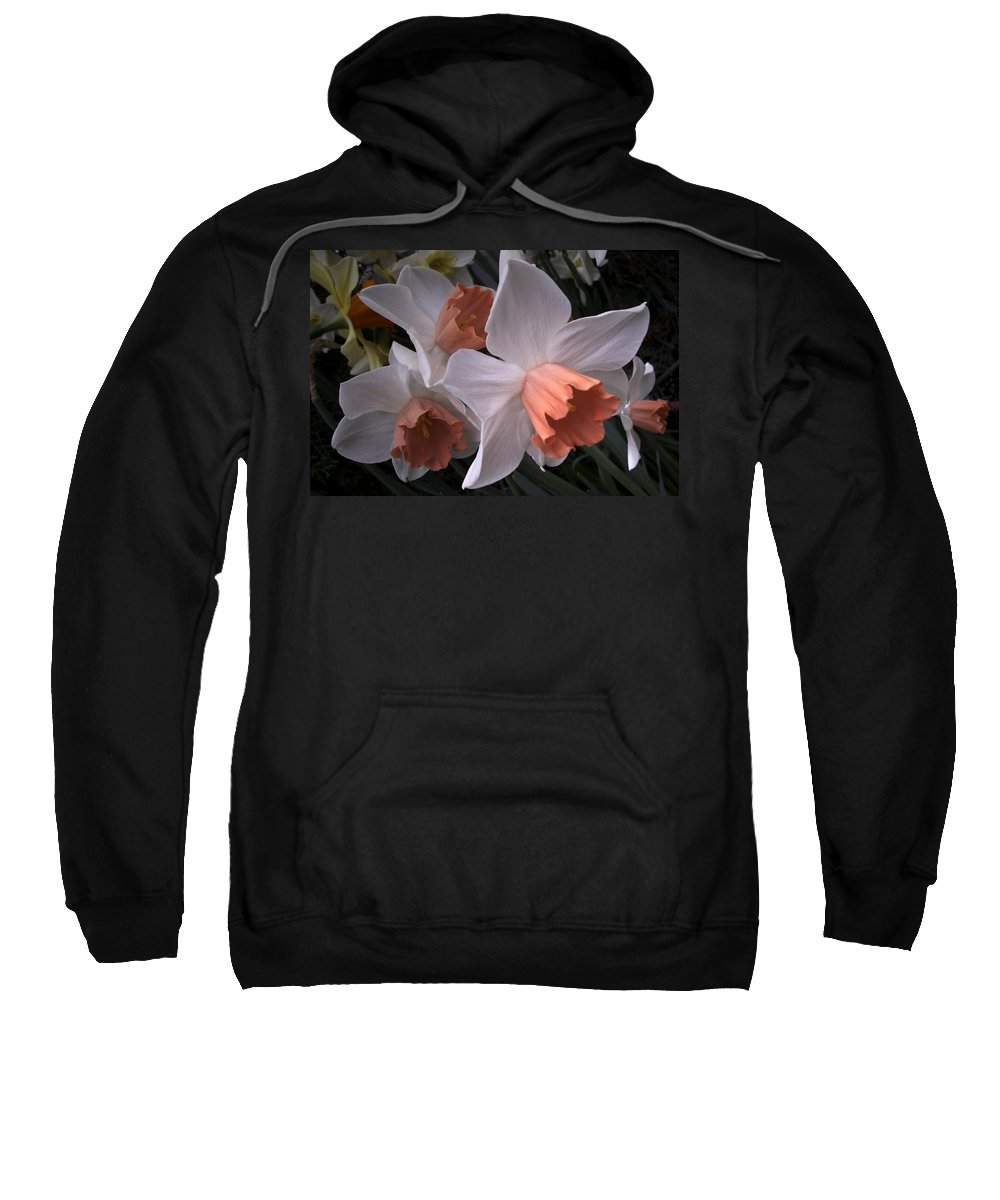 Flower Sweatshirt featuring the photograph Daffodils With Coral Center by Nancy Griswold