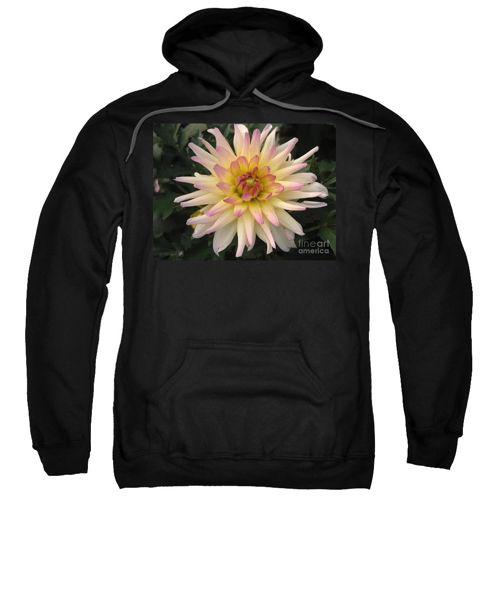 Dahlia Sweatshirt featuring the photograph Dahlia Named Camano Ariel by J McCombie