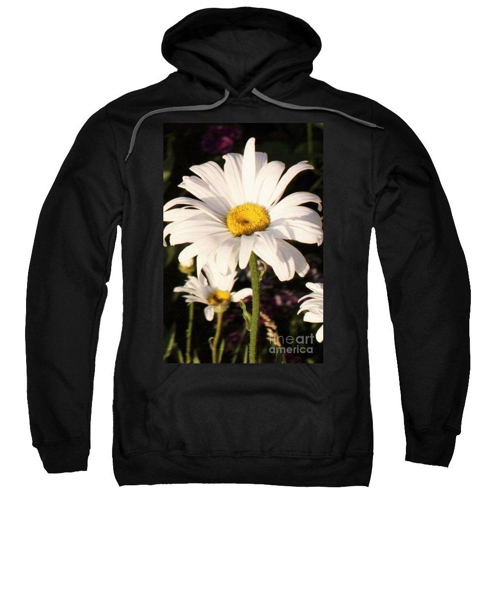 Daisy Sweatshirt featuring the photograph Daisy Close Up by Brandi Maher
